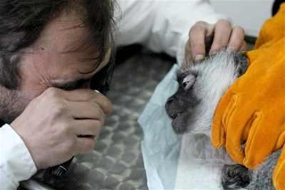 катаракта подготовка к операции